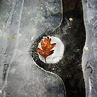 Leaf in Ice by nazboo