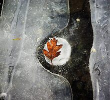 Leaf in Ice by Nasibu Mwande