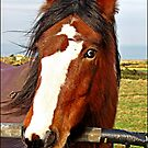 This is the little BLIND PONY that is depends of the EYES of the White  Horse. by Malcolm Chant