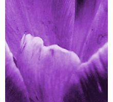 Crocus, up close and personal Photographic Print