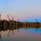 Gum Swamp over Sunset by Amy Evans