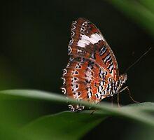 Butterfly II by Lisa Moss