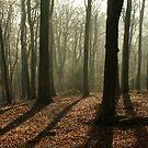 My morning woodland walk by stellaozza