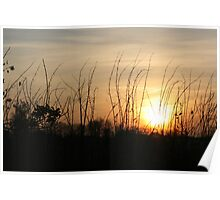 Sunset Silhouettes - Hedgerow Poster