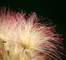 Fireworks Show by DebbieCHayes