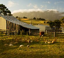 The Farmyard by Tim Wootton