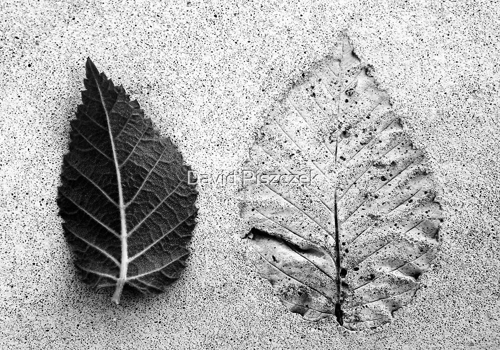 Leaf And Leafless by David Piszczek