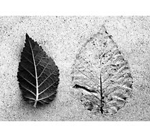 Leaf And Leafless Photographic Print