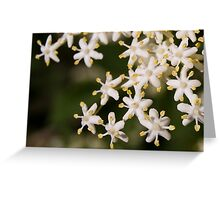 Elderflower Greeting Card