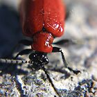 Red lily bug by missmoneypenny