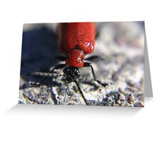 Red lily bug Greeting Card