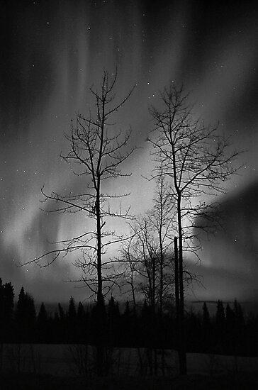 Black and White Auroras (2012 views) by peaceofthenorth