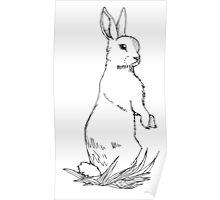 Watchful Rabbit Poster