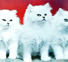 Three White Cats by Edward Denyer