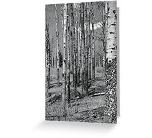 Stand of Aspen, Jack's Creek, Pecos Wilderness Greeting Card