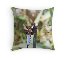Male Broad Bodied Chaser Dragonfly Throw Pillow
