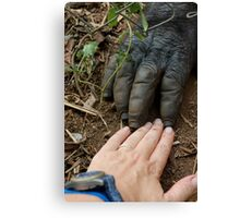 Gorilla Touch Canvas Print