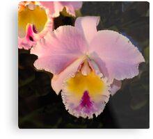 Pink Orchid -  Blue Ribbon Metal Print