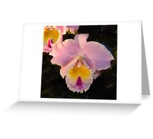 Pink Orchid -  Blue Ribbon Greeting Card