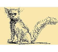 Cute Kitty Pen and Ink Photographic Print