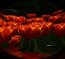 Red Tulips by becky-lou