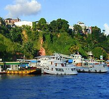 Coast Line In Manaus  by Shelby  Stalnaker Bortone
