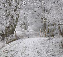 A winters path by Karen  Betts