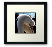 Pelican in St James Park Framed Print