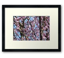 Cherry Blossom Flowers Framed Print