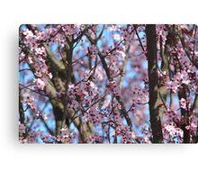 Cherry Blossom Flowers Canvas Print