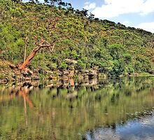 Reflection - Royal National Park - The HDR Experience by Philip Johnson