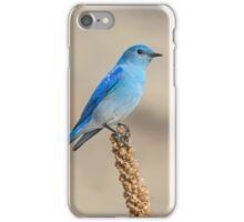 Perched Mountain Bluebird iPhone Case/Skin