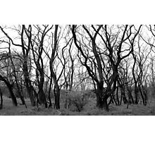 Twisted Trees Photographic Print