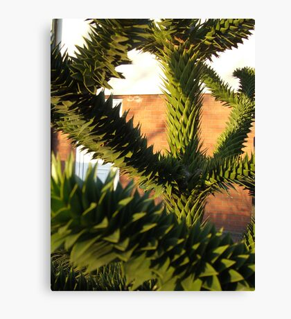 Abstract Plant Canvas Print