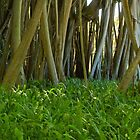 Banyan and Ferns at Ringling Gardens by Marilyn Cornwell