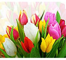 Colorful Tulips Pixelate Photographic Print