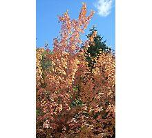 Autumn in Farmington Canyon, Utah Photographic Print