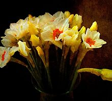 Daffodils by Mike Crawford