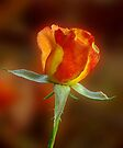 Rose of Two Colors by Sandy Keeton
