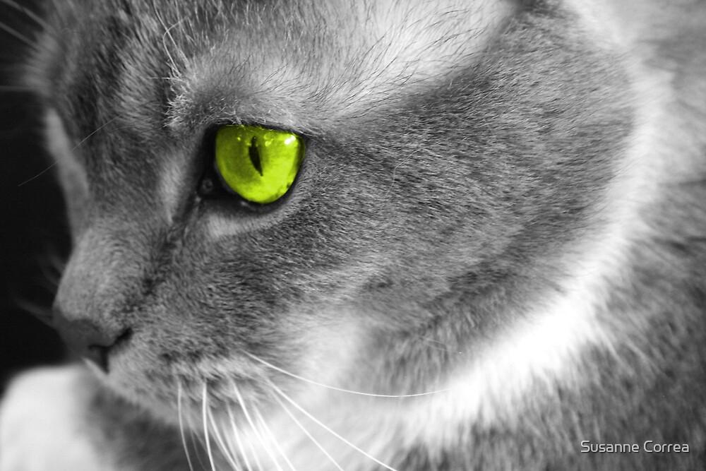 meow by Susanne Correa