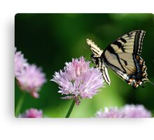 Second Nature Butterfly Art Canvas Print