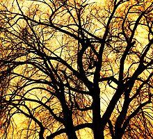 Wild  by Lynn Stratton