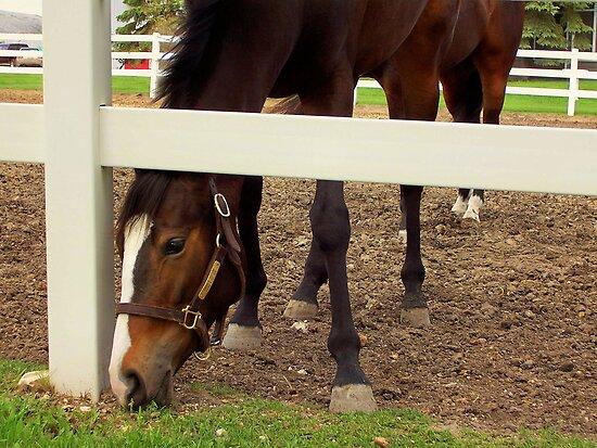 SEVEN LEGGED HORSE by Larry Trupp