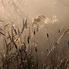 Golden Light by Andrew Holford