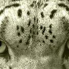 Snow Leopard Eyes by Lisa G. Putman