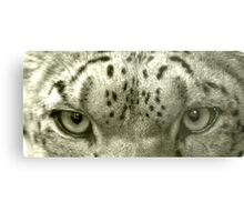 Snow Leopard Eyes Metal Print