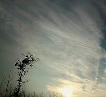 Crazy Sky by Wesley Rose