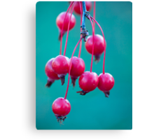 Candy.  Canvas Print