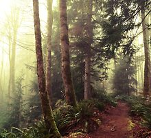 Elk Falls Forest Trail - Campbell River, British Columbia, Canada by Kimberley Bruce