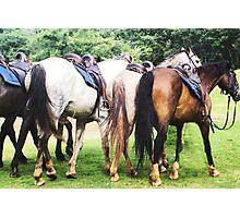 Horse's Photographic Print